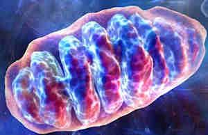mitochondria_web